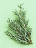 Rosemary  a Fragrant Culinary Herb