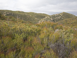 Chaparral Vegetation at 4500 Feet in the Laguna Mountains  San Diego County  California  USA