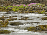 Flowers and a Glacial Stream  Iceland
