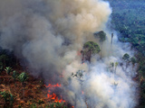 Aerial View of Rainforest Being Burned to Clear Land to Make Pasture for Cattle Ranching