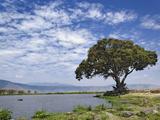 Single Tree and Lake  Ngorongoro Crater  Tanzania  Africa