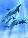 Illustration of Three Bottlenose Dolphins Swimming under the Ocean