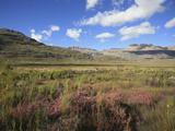 Fynbos Vegetation  Cederberg Wilderness  South Africa