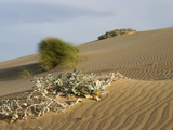 Sand Dunes Along the Coast Near Witsand East of Cape Town  South Africa