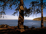 Looking Out over Haro Strait from Lime Kiln Point State Park  Washington  USA