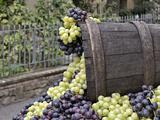 Grapes  La Festa Dell'Uva  Impruneta  Italy  Tuscany
