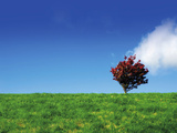 Illustration of a Beautiful Single Tree on Hill Against a Bright Blue Sky with Singe White Cloud