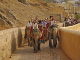 Tourists Riding Indian Elephants Up to Amber Fort  Jaipur  India
