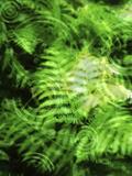 Conceptual Illustration of Fern Leaf Background