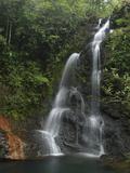 Tiger Fern Double Waterfall  Cockscomb Basin Wildlife Sanctuary  Belize