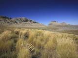 Cederberg Wilderness Fynbos Vegetation  South Africa