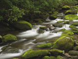 Mountain Stream Cascading over Moss Covered Boulders  Roaring Fork Motor Nature Trail