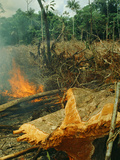 Slash-And-Burn Agriculture  Amazon Region  Acre  Brazil