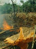 Slash-And-Burn Agriculture  Amazon Region  Acre  Brazil