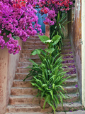 Bougainvillea Flowers  Philodendron  and Ferns on and around Building Steps  Crete  Greece