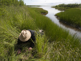 A Researcher Digs Through Grasses Along a Riverbank in the Siberian   Polaris Project