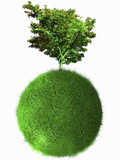 Illustration of a Beautiful Single Tree on Top of a Grass-Covered Sphere on a White Background