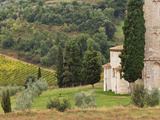 Vineyard and St Antimo Abbey  Near Montalcino  Italy  Tuscany