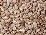 Pinto Beans (Phaseolus Vulgaris)  Native To Central And South America
