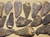 Dried Morel Mushrooms (Morchella)