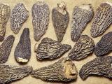 Dried Morel Mushrooms (Morchella)