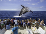 A Group on a Whale Watching Boat Out of Lahaina