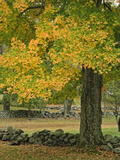 Stone Wall and Autumn Trees  Minute Man National Historical Park  Massachusetts