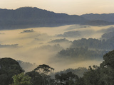 Valley Fog at Dawn in the Mountains of the Nyungwe Forest National Park  Rwanda