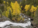Bear Creek Falls in the Uncompahgre River Drainage  Flowing Past a Stand of Aspen