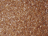Brown Flax Seeds (Linum Usitatissimum)  Native To Southern Eurasia