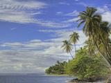 Keiki Beach and Palm Trees Lahaina  Maui  Hawaii  USA