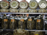 Glasses Jars Full of Dried Seahorse for Sale as Aphrodisiacs at a Medicine Shop in Guangzhou  China