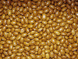 Buckskin Pinto Beans (Phaseolus Vulgaris)  Native To Central & South America