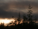 The Sun Sets Behind a Stand of Larch Trees in Siberia's Boreal (Taiga) Forest
