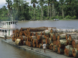 Barge Loaded with Rainforest Logs in the Amazon River  Para  Brazil