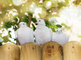 A Row of White Doves Sit Along a Fence in Bright Sunlight