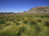 Cape Reeds  Cederberg Wilderness