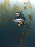 Research Diver and Marine Biologist Performing a Rockfish Survey Off Asilomar  Kelp Forest