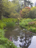 Large Pond with Candelabra Primula and Acers in the Spring  Minterne  Dorset