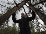 Researcher Stands in the Middle of a Split Larch Tree Trunk