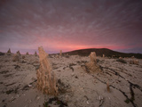 Caliche Forest at Sunrise  Channel Islands National Park  San Miguel Island  California  USA