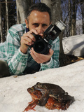 Frogs Mating in the Snow (Rana Temporaria)