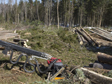 Cut-To-Length Harvesting of Spruce  Maine  USA
