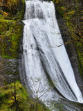 Wolf Creek Falls  Umpqua National Forest  Cascade Range  Oregon  USA