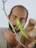An Entomologist Catching a Predatory Bush Cricket (Saga Pedo)