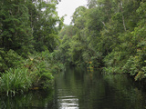 Rainforest River in Tanjung Puting National Park  Kalimantan  Borneo  Indonesia