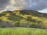 The Grassy and Oak Woodland Slopes of Mt Diablo  Central California  USA