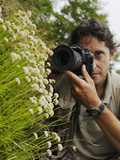 A Photographer Taking Pictures of Santolina Leuchanta  Endemic in the Apuane Alps  Tuscany  Italy