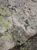 Groundwater Issuing from Crack in Lichen Covered Granite in the Rocky Mountains  Colorado  USA