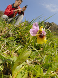 A Botanist Surveying Orchids (Ophrys Tenthredinifera) by Taking Gps Coordinates  Sicily  Italy